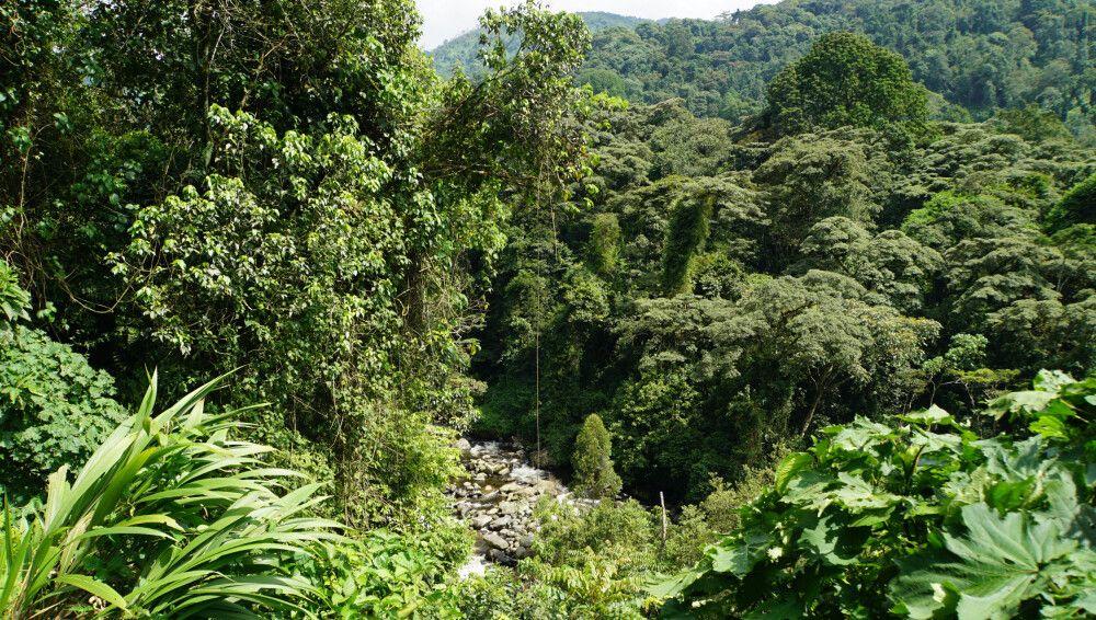Die üppige Vegetation der Ruwenzoriberge ist das ganze Jahr über grün und reichhaltig.