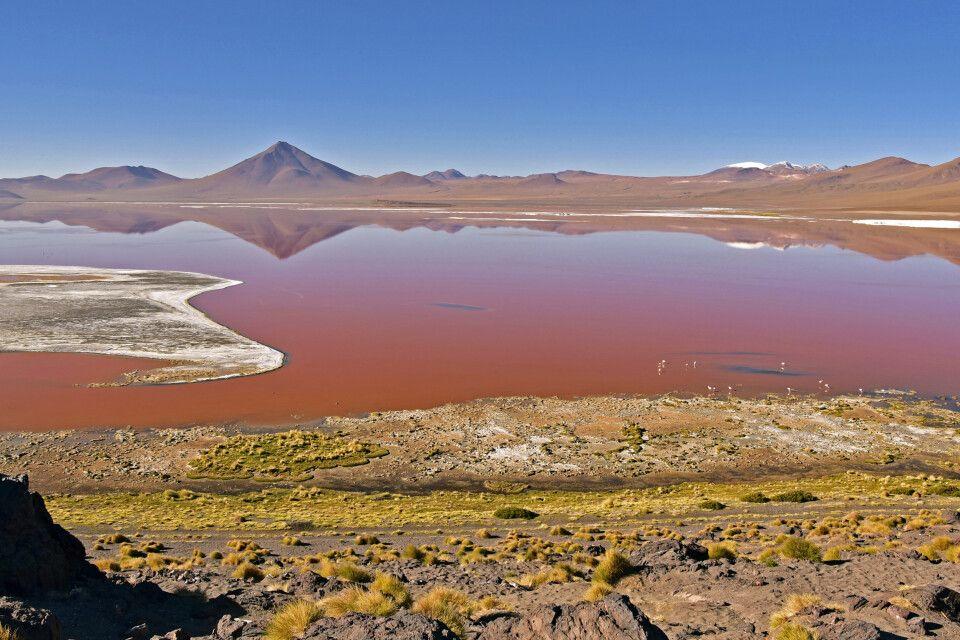 Blutrote Laguna Colorada