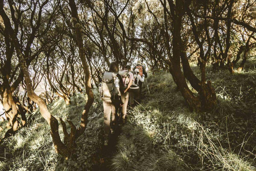 Entlang lichter Haine in den Simien Mountains