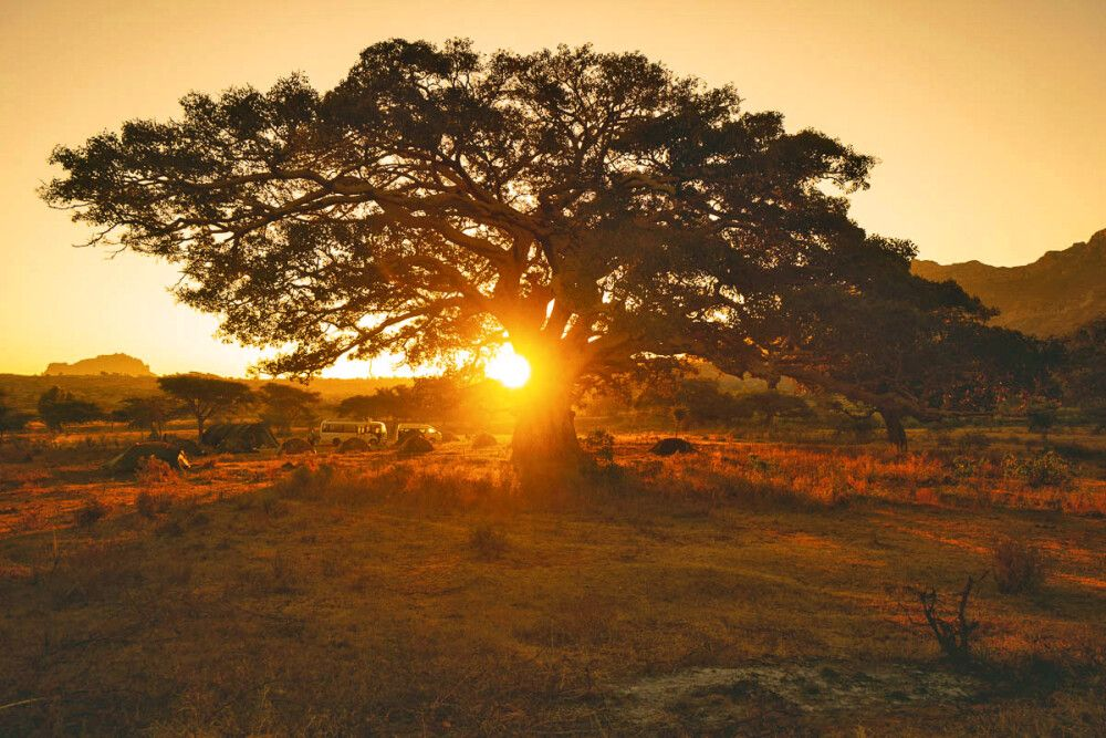 Vielleicht einer der schönste Campingplatz Afrikas – unter einem Feigenbaum am Fuss der Sandsteinberge in der Gheralta Region