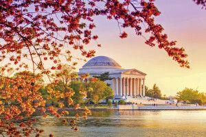 Jefferson Memorial wähend des Kirschblütenfestivals, Washington, DC