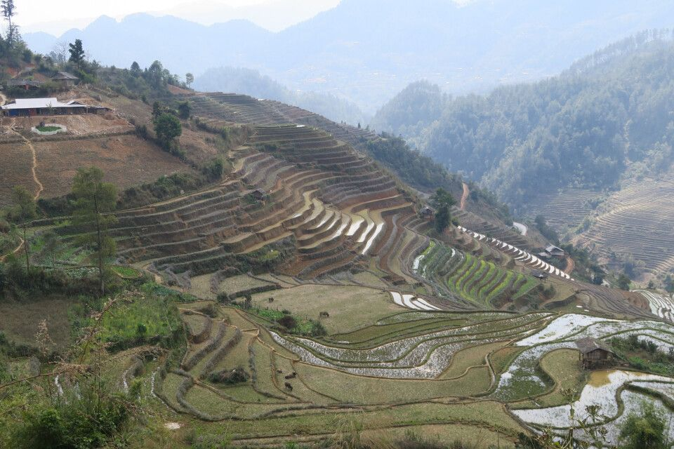 Mu Cang Chai - Terassenfeldbau in den Bergen