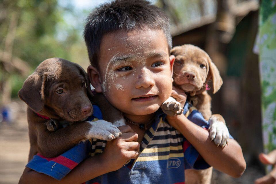 Kleiner Junge mit Hundewelpen