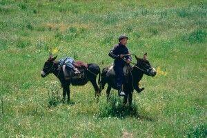 Junge mit Eseln in Kirgistan