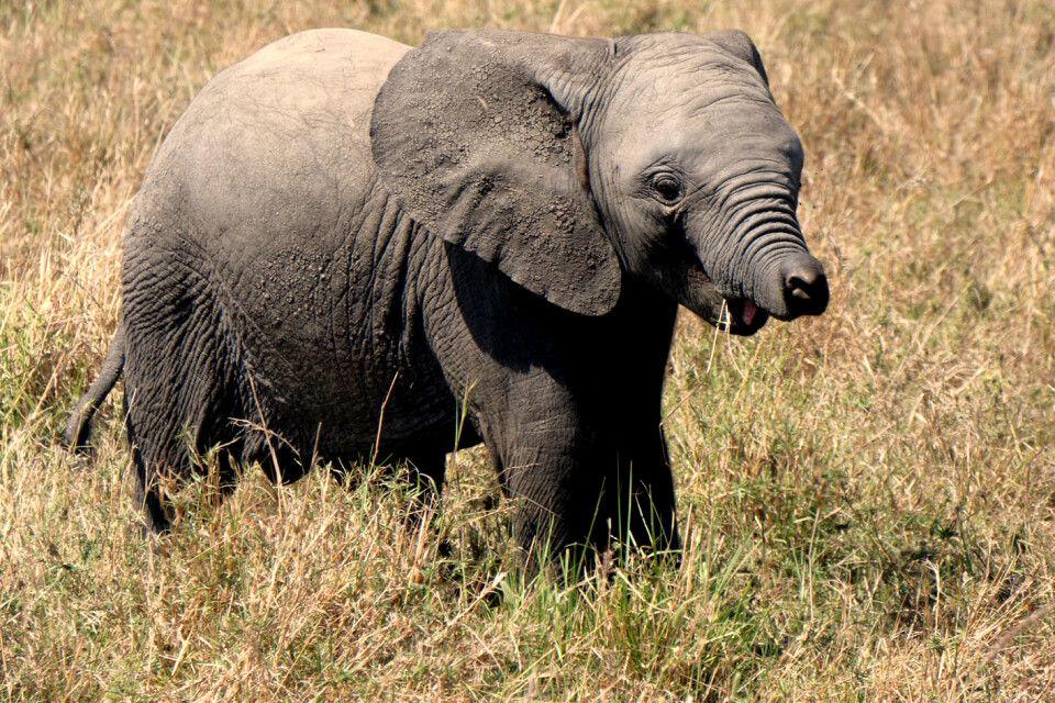 Auf Safari in Kenia
