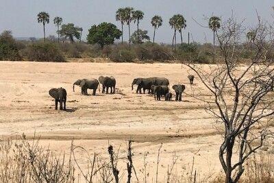 Auf Safari im Süden Tansanias unterwegs
