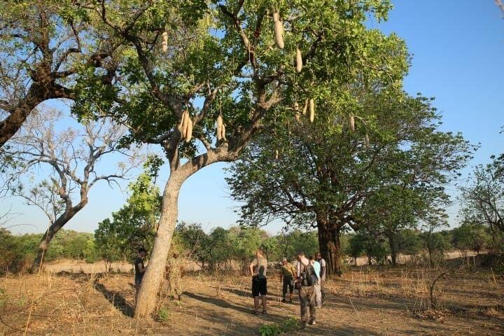 SAMDIA_201023_1TTH_6_Sambia Walking Safari.jpg