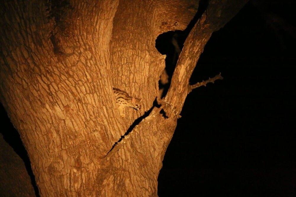 SAMDIA_201023_1TTH_10_Sambia Immer ein Erlebnis – eine Nachtpirschfahrt.jpg