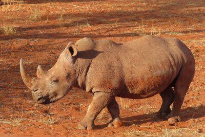 Auf Tuchfühlung mit Afrikas Tierwelt
