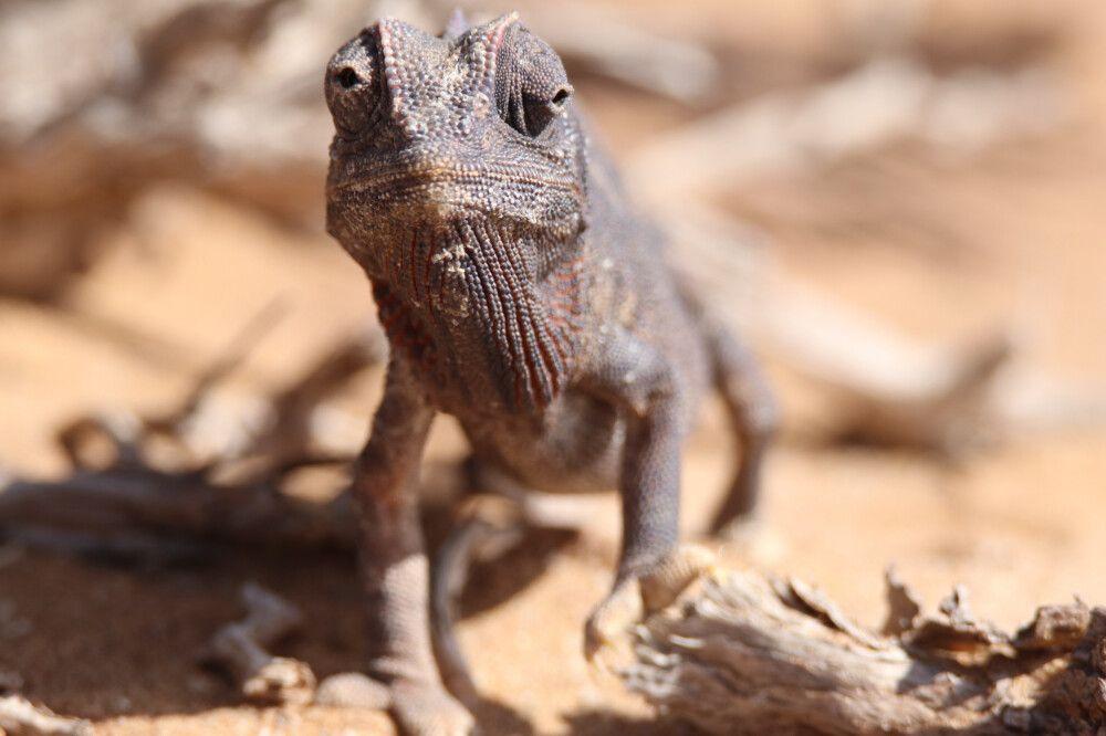 Tierwelt Namibias