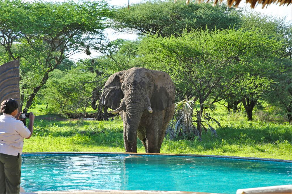Elefant direkt am Pool des Severin Safari Camps