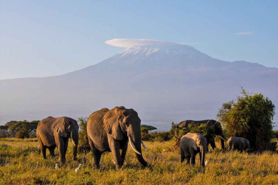 Elefanten vor der Kulisse des Kilimanjaro
