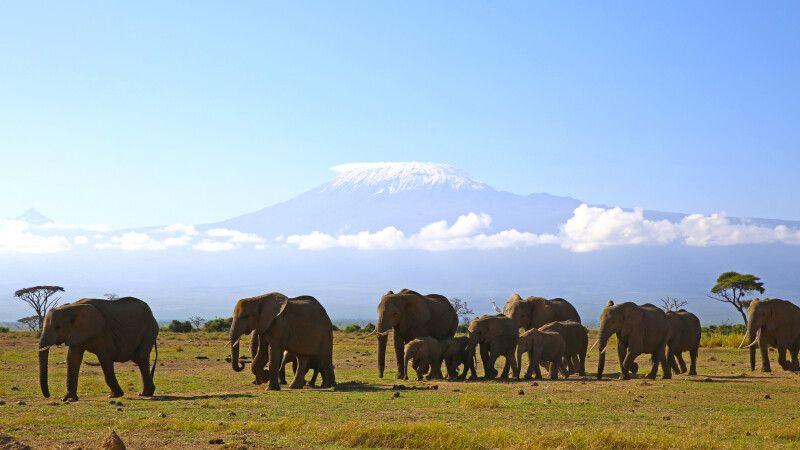 Elefanten vor der Kulisse des Kilimanjaro © Diamir