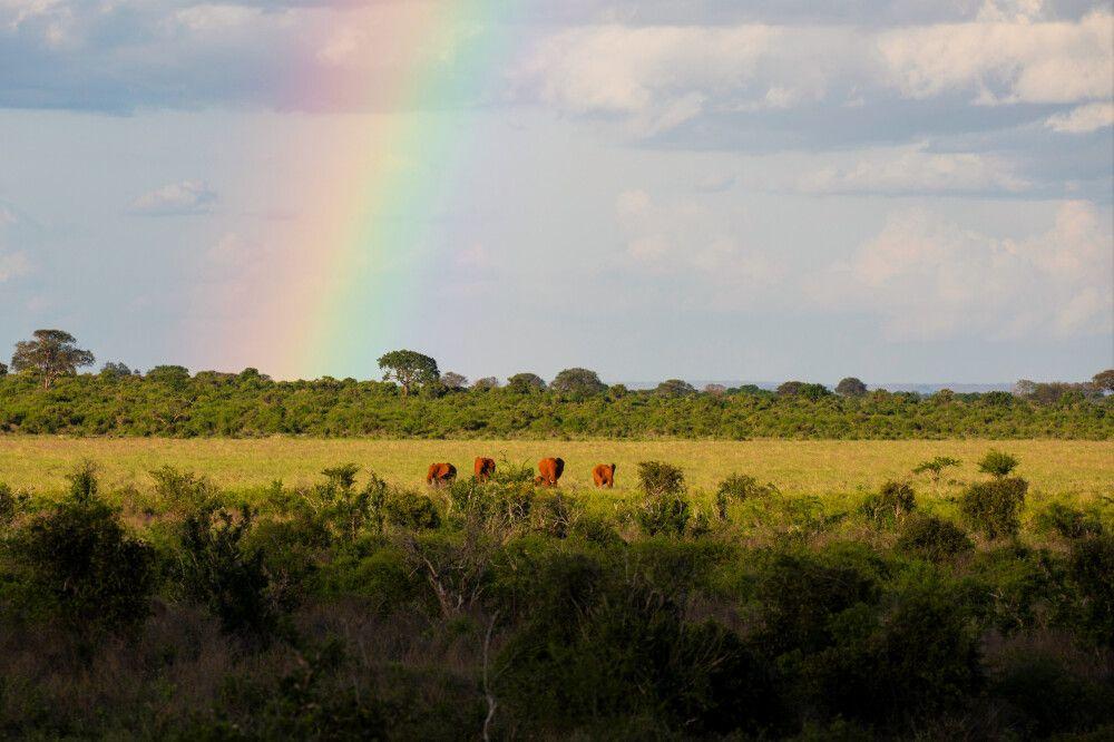 Regenbogen in der Savanne
