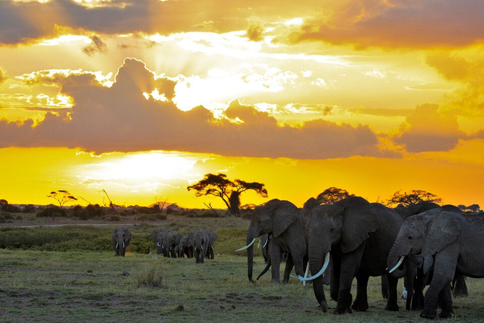 Stimmungsvolles Afrika
