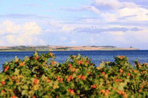 Blick über die Bucht von Aarhus