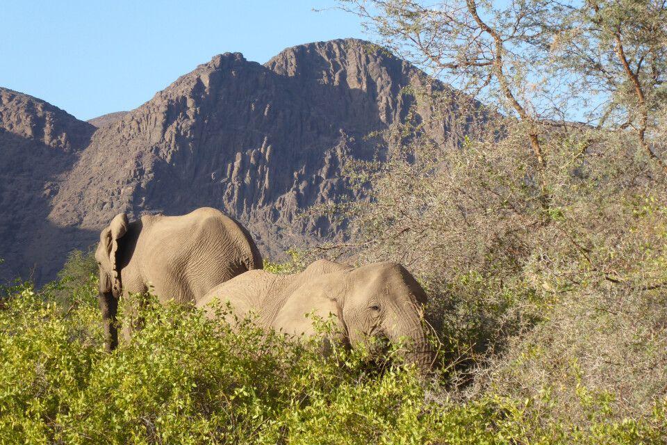 Auf Pirsch in der Gegend um Sesfontein
