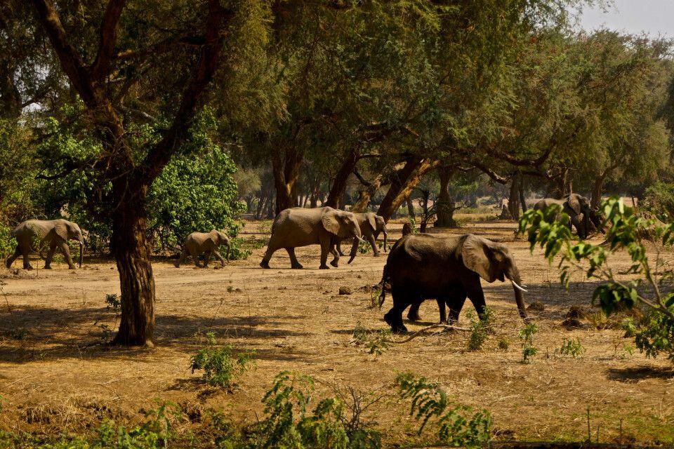 Lower Zambezi NP