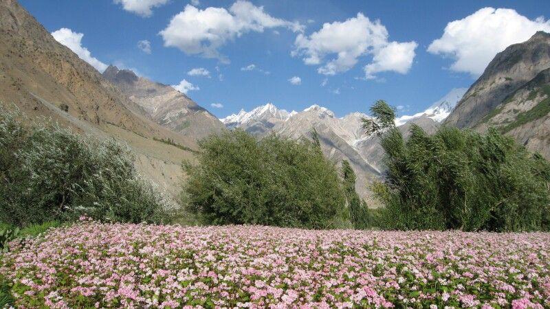 Blühende Wiesen bei Arandu. © Diamir