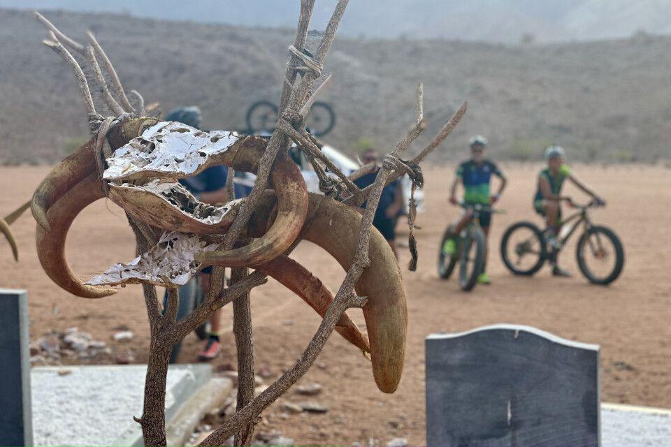 Rinder haben eine große Bedeutung in der Kultur der Himbas