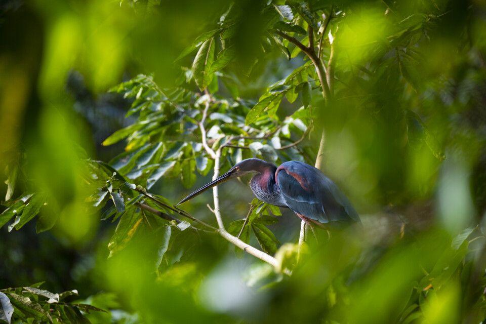 Tierbeobachtung im mexikanischen Dschungel