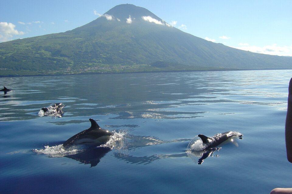 Delfine vor der Küste