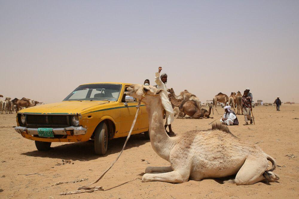 Kamelmarkt in Omdurman