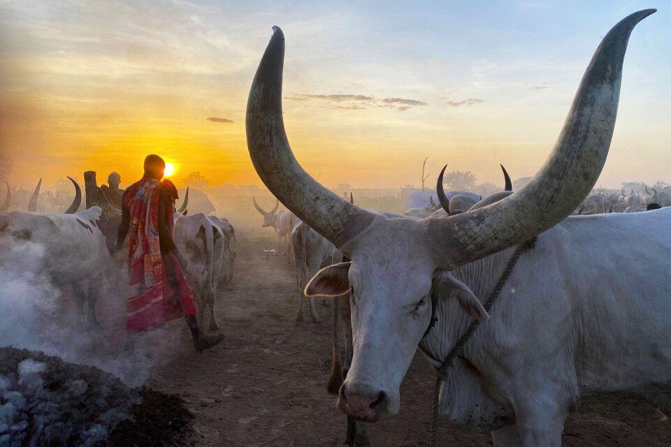 Das Volk der Mundari im Südsudan