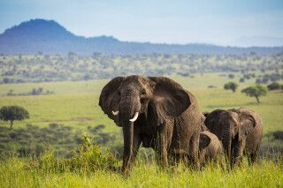 Elefanten im Kidepo-Nationalpark