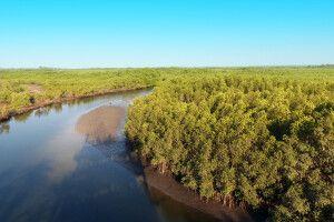 Makasutu Culture Forest in Gambia