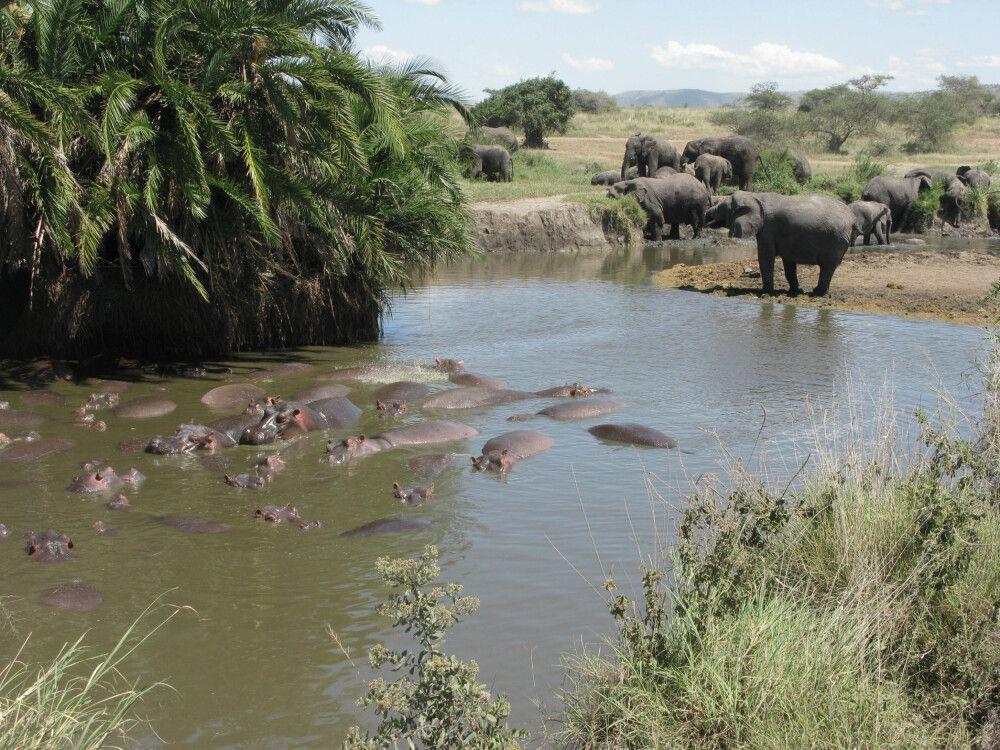 unterwegs in Tansania und auf Sansibar