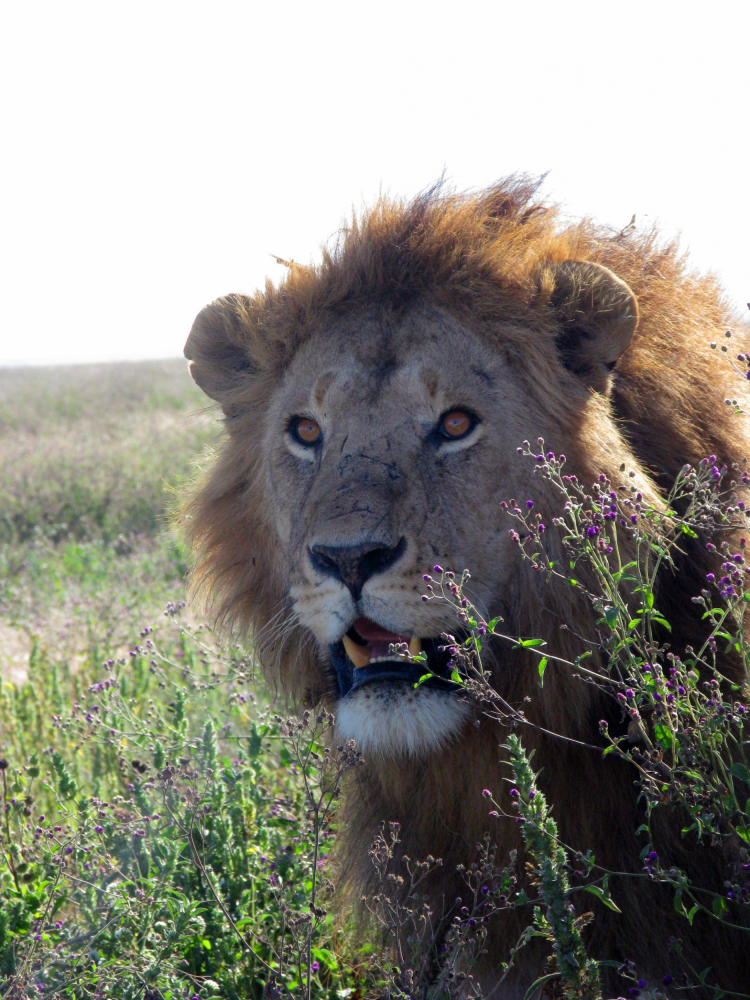 TANDBD_040621_4MSS_unterwegs in Tansania und auf Sansibar (2).jpg