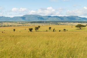 Im Kidepo-Nationalpark