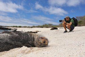 Verträumter Seelöwe am Strand von Galapagos  lässt sich von einem Fotografen nicht aus der Ruhe bringen