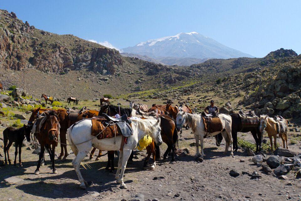 Der Gepäcktransport am Ararat erfolgt bis zum Hochlager mit Lastentieren