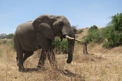 Auf Safari unterwegs in Tansania