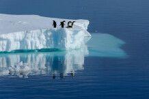 Adelie-Pinguine auf einem Eisberg