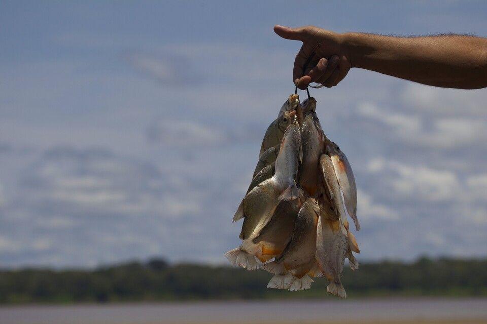 Fischfang im Amazonasgebiet