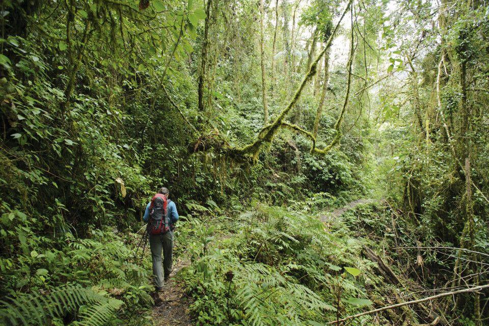 Wandern im Bergnebelwald von Mindo