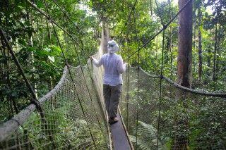 Canopy Walk im Regenwald