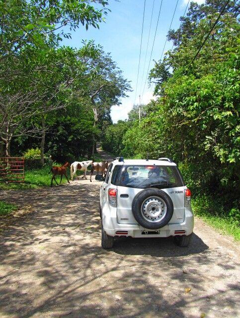 Per Mietwagen durch Guanacaste