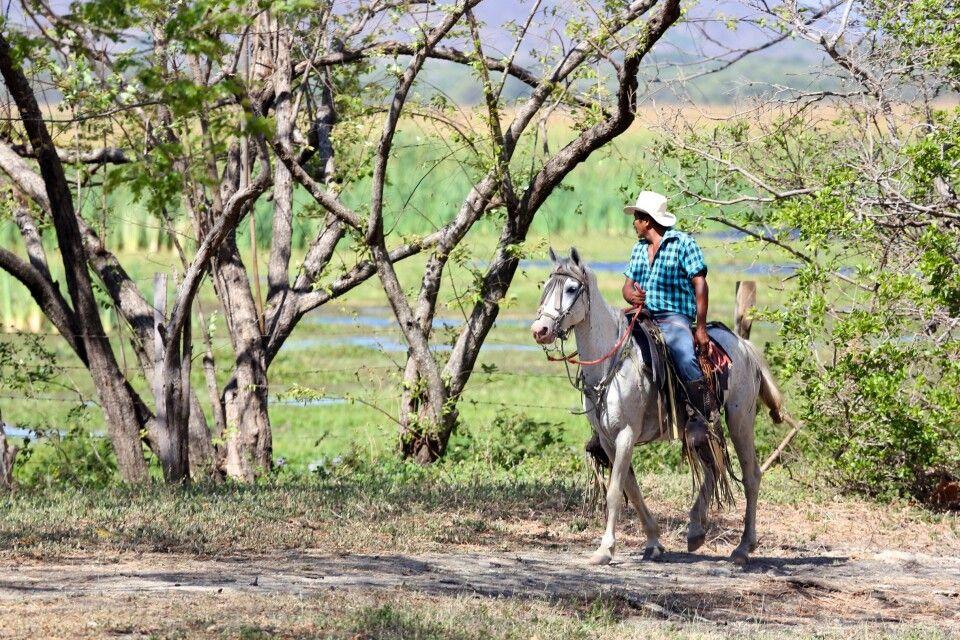 Sabanero in Guanacaste