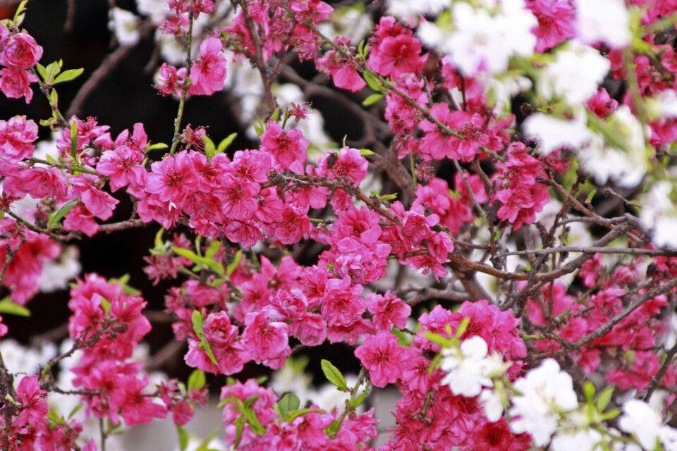 Frühling in Bhutan