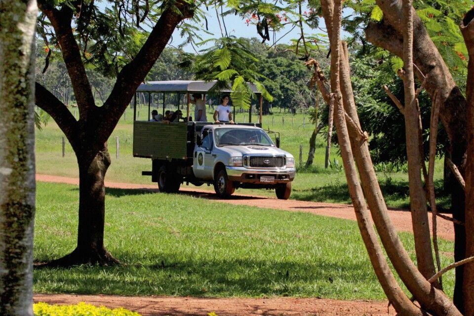 Auf Safari im Pantanal