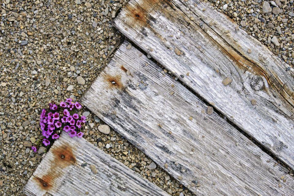 Ein zartes Pflänzchen behauptet sich bei Poolepynten