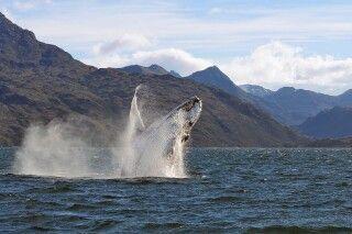 """Walbeobachtungstour mit """"Whalesound"""""""