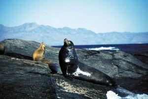 Auf einer  Bootstour zur Isla Coronado entdeckt man allerhand Tiere, Baja California, Mexiko