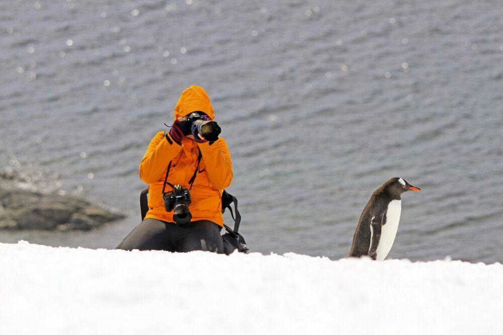 Pinguine sind die Stars der Antarktis