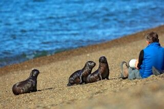 Auf Tuchfühlung mit den Seelöwen, Valdes