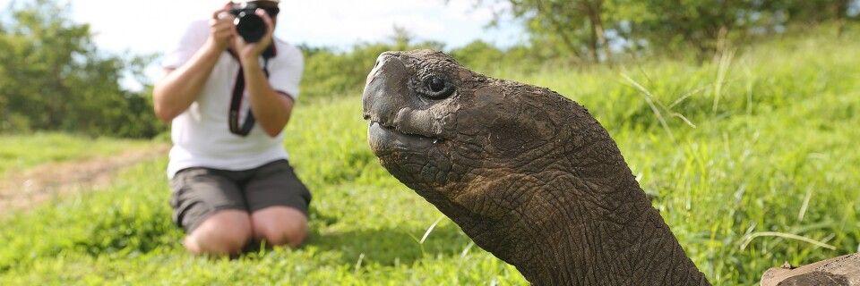 Riesenschildkröte vor der Linse